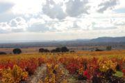 Couleurs d'automne à Châteauneuf-du-Pape