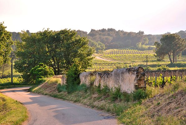 Sentier pédestre de l'appellation Châteauneuf-du-Pape