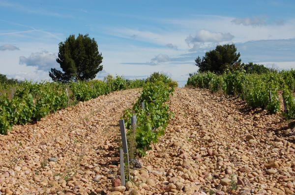"""Le vignoble Lieu dit """"La Crau"""""""