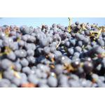 Benne de raisins