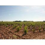 Le vignoble de l'AOC Châteauneuf-du-Pape